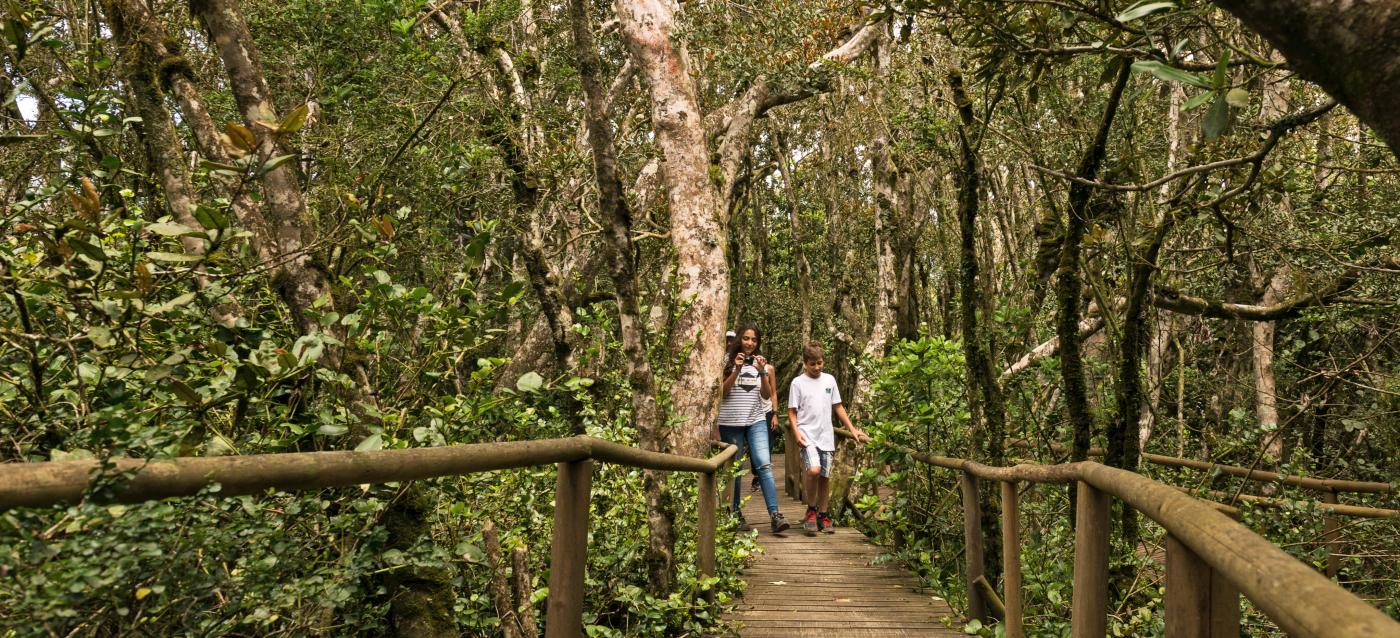 Imagen de unos jóvenes turistas recorriendo los senderos entre bosques nativos en el Parque Nacional Fray Jorge