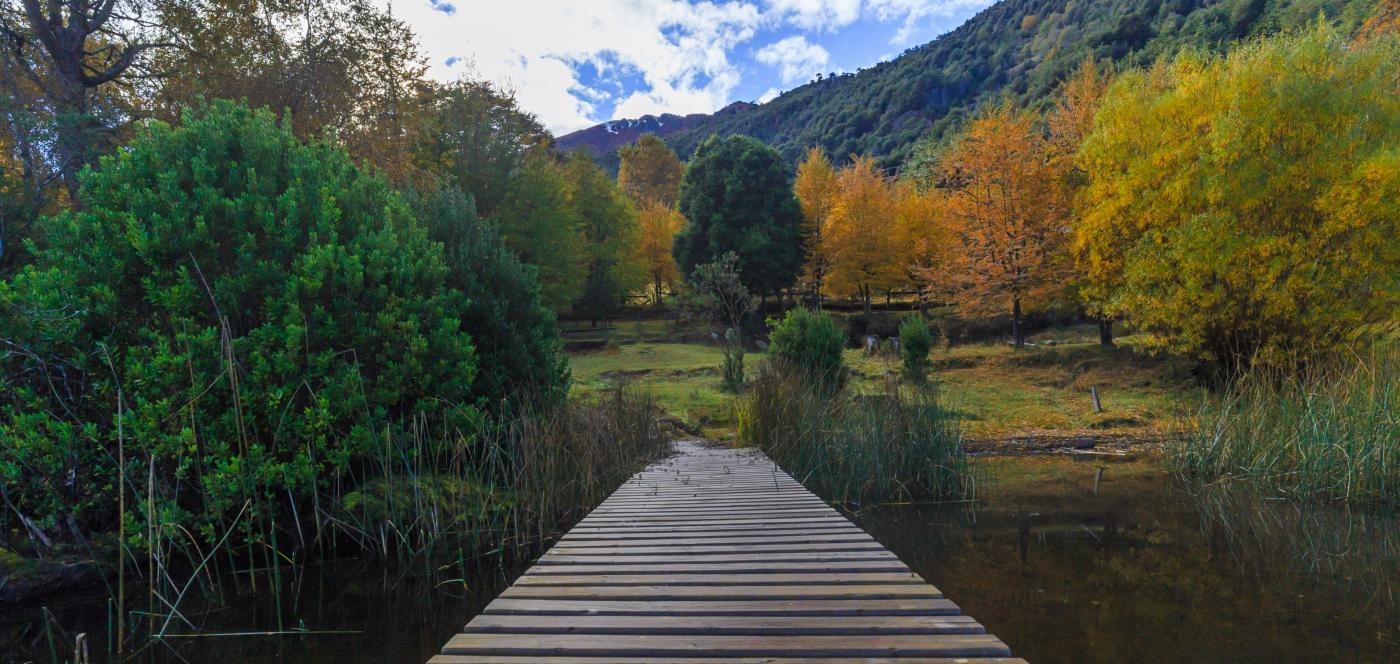 Imagen panorámica de uno de los senderos del parque Nacional Huerquehue, donde se aprecia la difrencia de colores de los árboles en otoño.