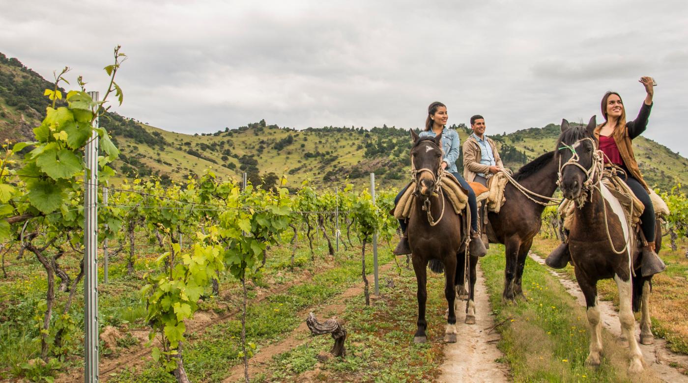 Imagen de un grupo de turistas montando a caballo por los viñedos de la región de Coquimbo