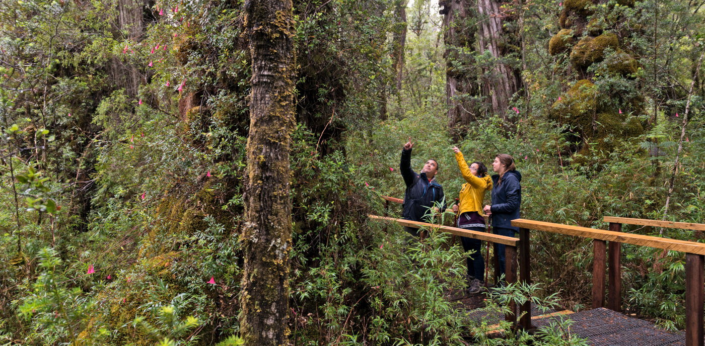 Imagen de un grupo de turistas realizando observación de flora y fauna en el Parque Nacional Alerce Costero