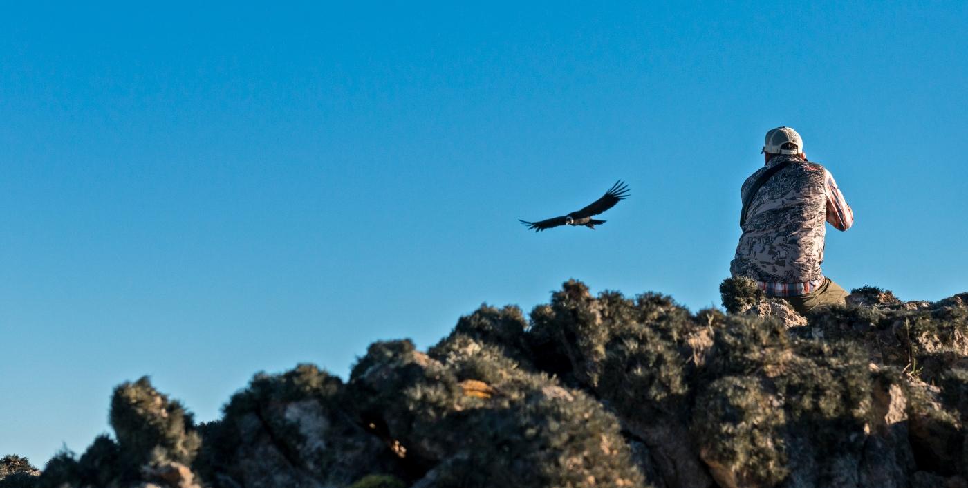 Imagen que muestra a un hombre observando el vuelo de un cóndor chileno