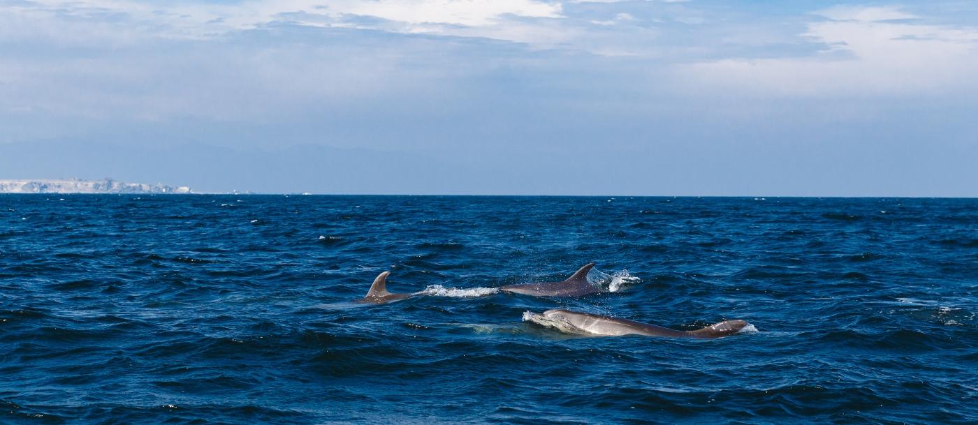 Imagen que muestra las costas de la Reserva Nacional Pinguinos de Humboldt donde se lucen hermosas toninas