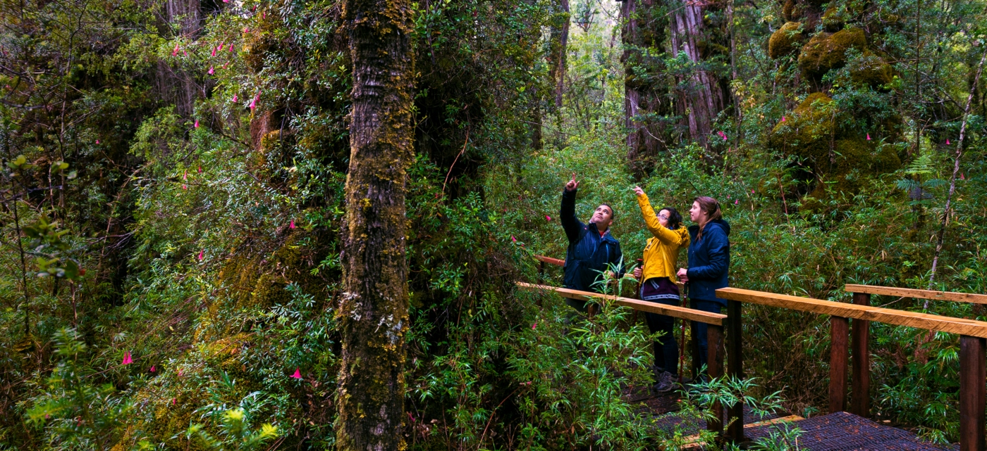 Imagen de un grupo de turistas recorriendo los bosques del sur de Chile