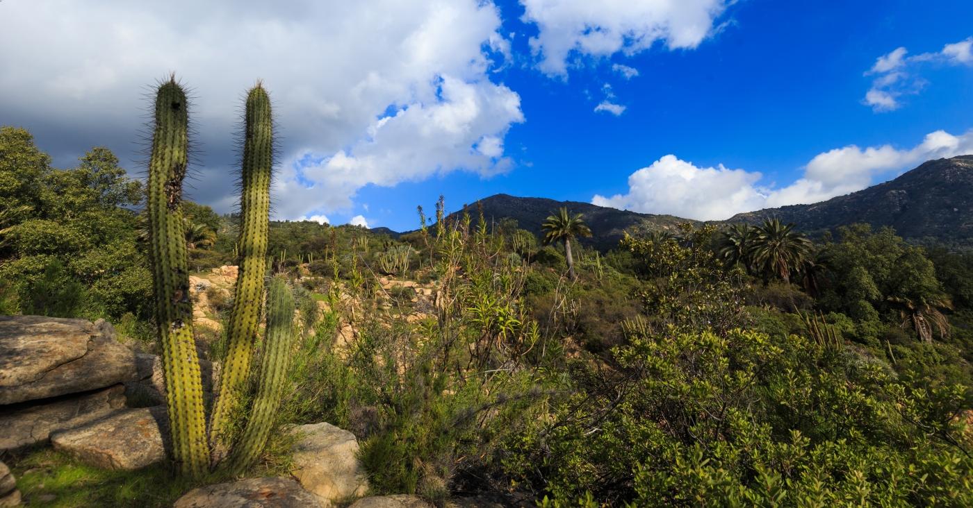 Imagen de la vegetación del Parque Nacional La Campana