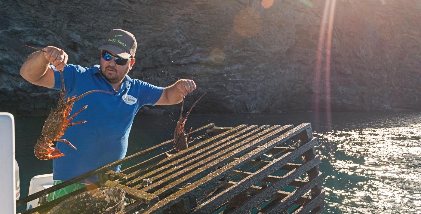 Imagen de un hombre sacando langostas de la Isla de Juan Fernández en un día de sol