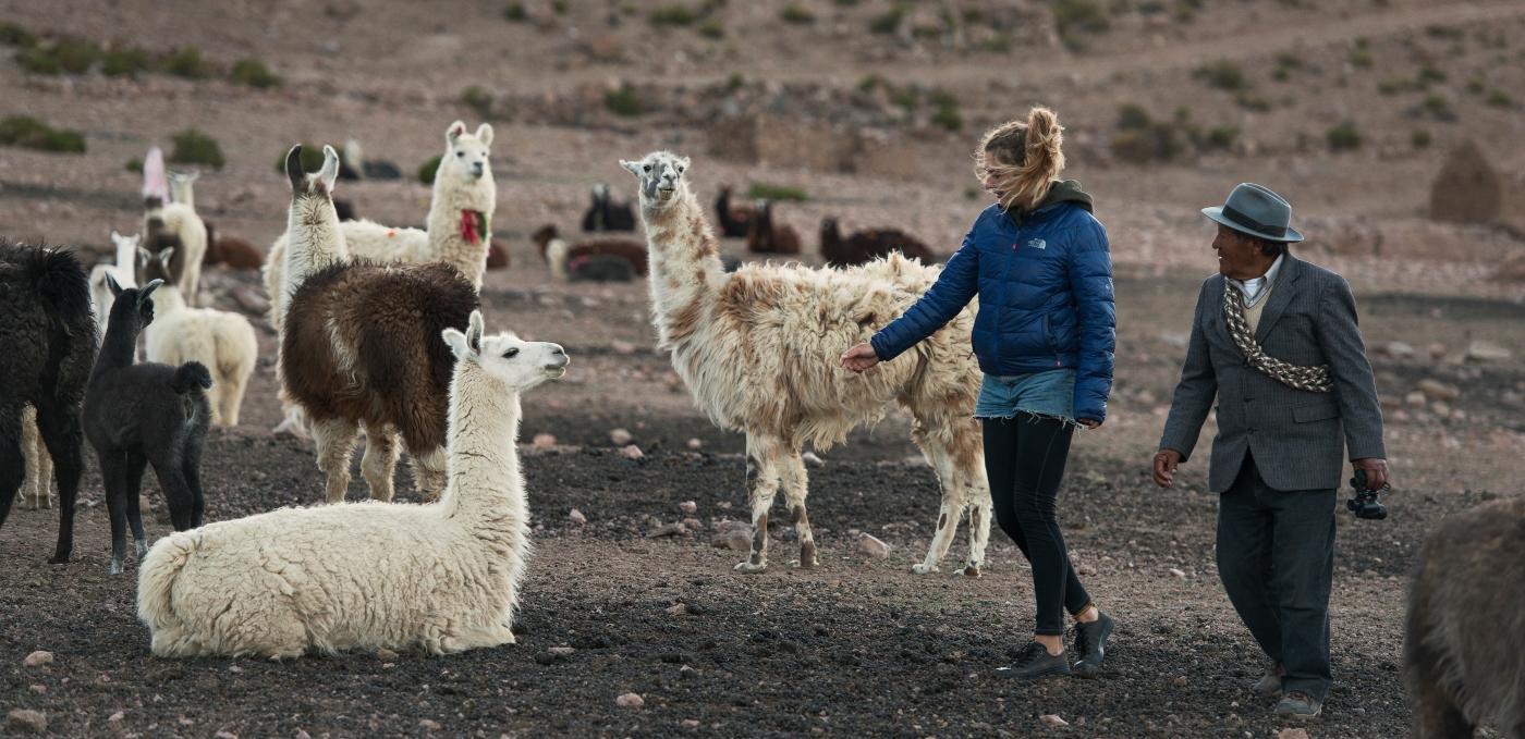 Imagen de una turista recorriendo el altiplano rodeada de llamas junto a un representante del pueblo Aymara