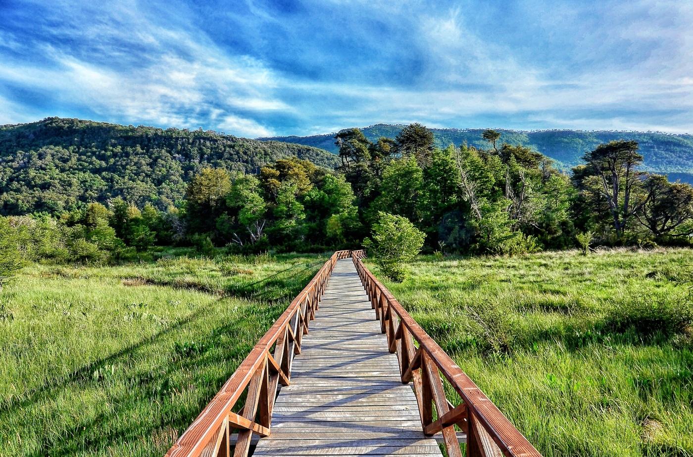 Imagen del Parque Nacional Tolhuaca donde se ve un cielo despejado y un largo puente a bosques nativos