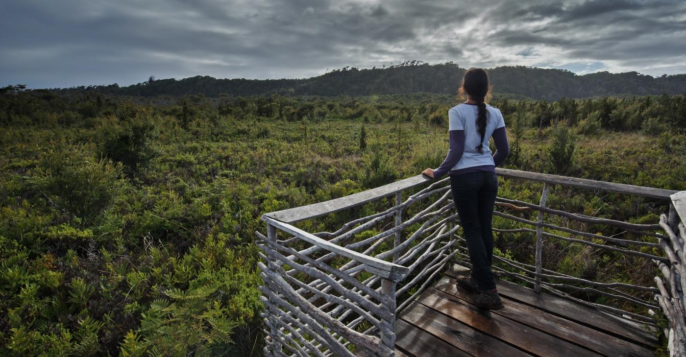 Imagen de uno de los miradores del Parque Nacional Chiloé donde se ve la naturaleza del lugar