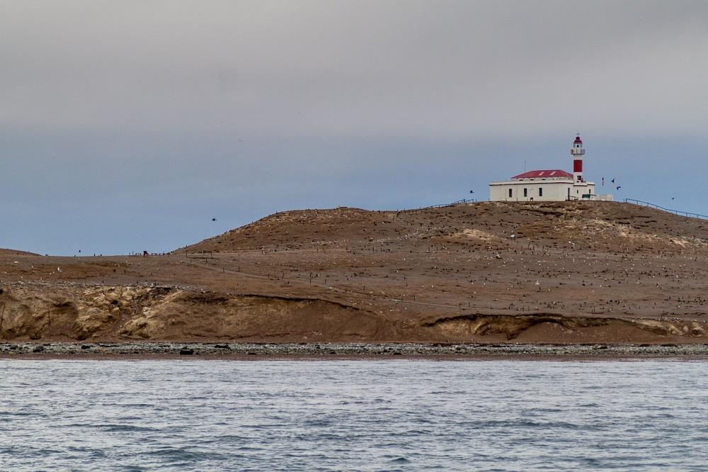 Parc National de l'île de Magdalena la zone la plus méridionale du Chili!