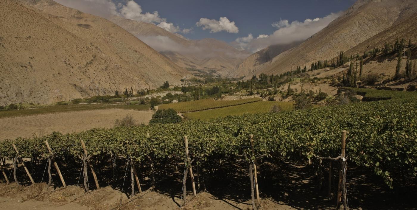 Imagen de las plantaciones de viñedos del Valle de Elqui
