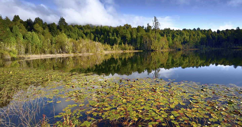 Imagen de la hermosa vegetación del Parque Nacional Puyehue, donde destaca una laguna azul