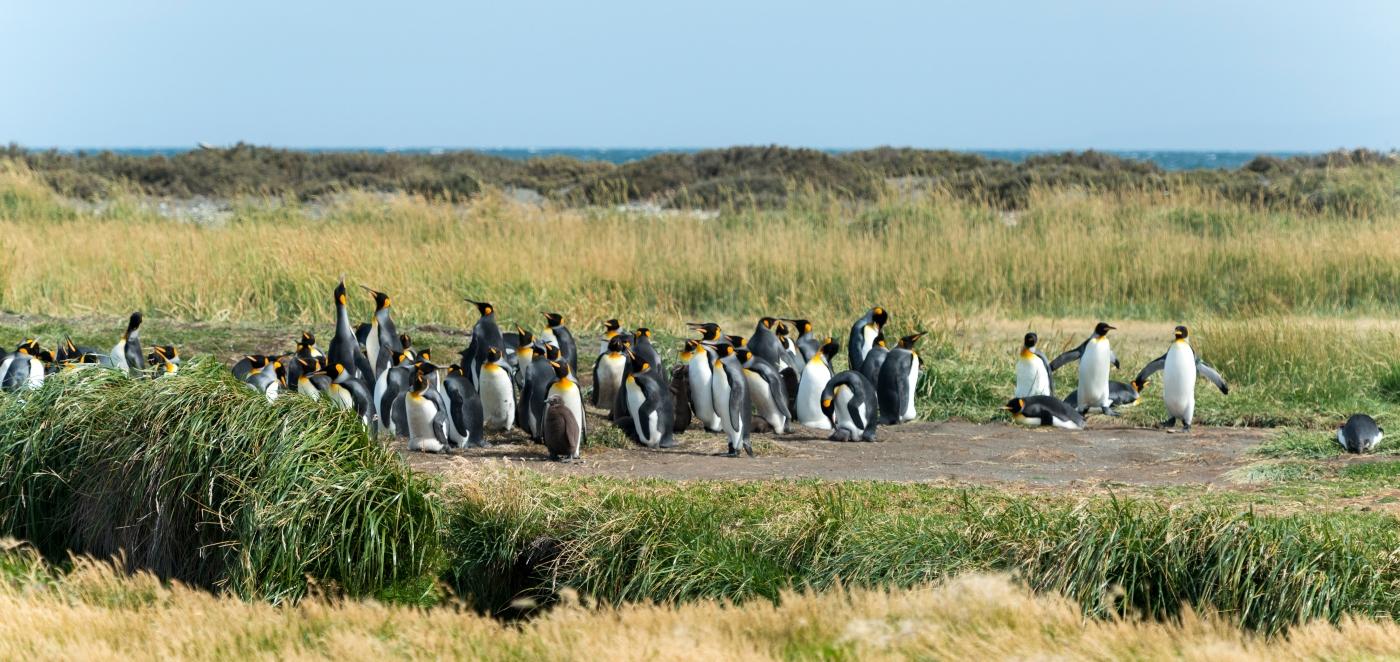 Parque Pinguino Rey en el sur de Chile