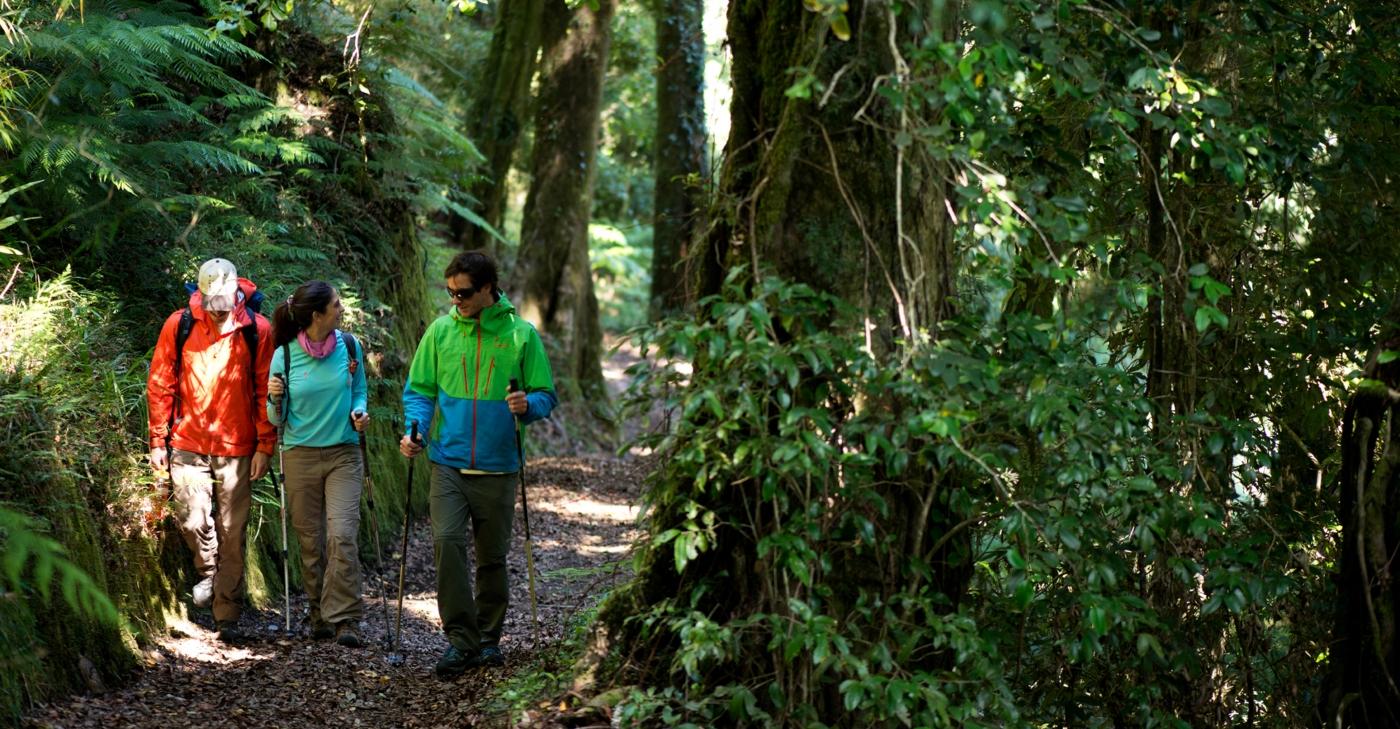 Imagen de un grupo de turistas recorriendo el Parque Futangue