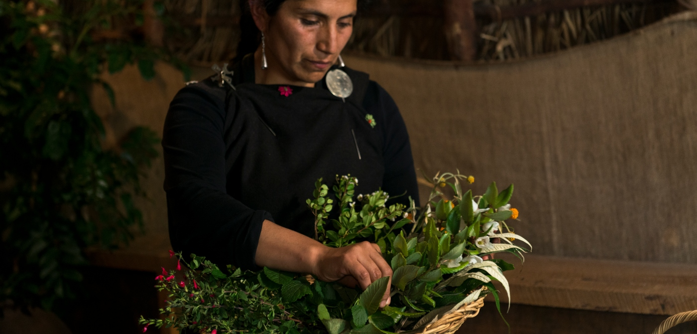 Imagen de mujer Mapuche con Hierbas Medicinales