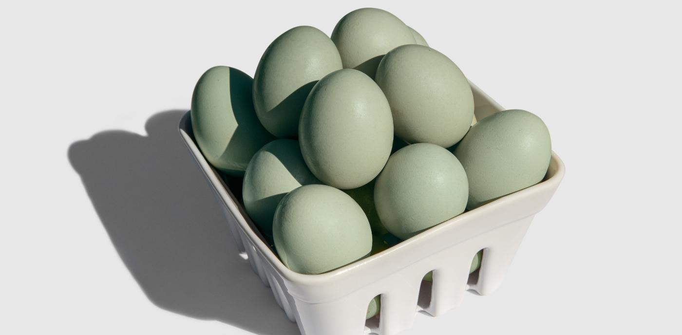 Huevos azules Mapuches