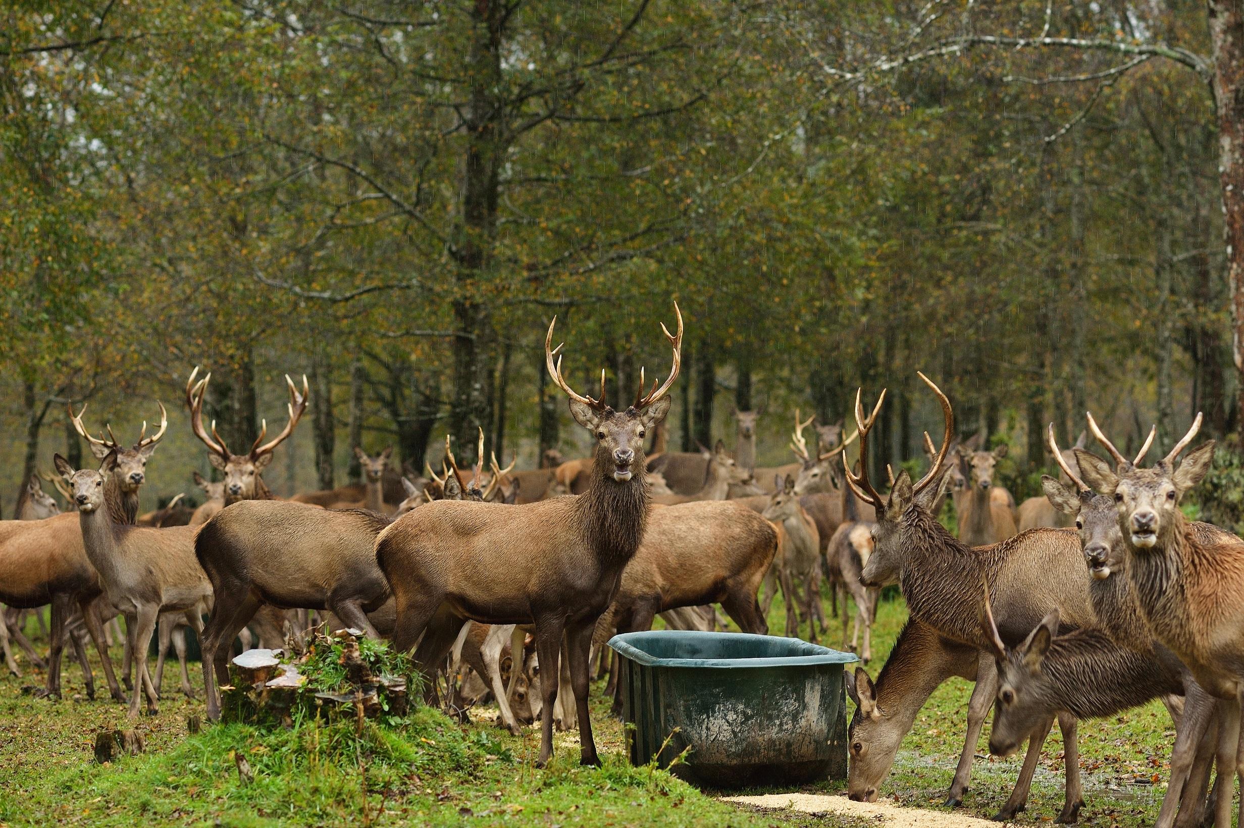 Imagen de grupo de ciervos en Reserva