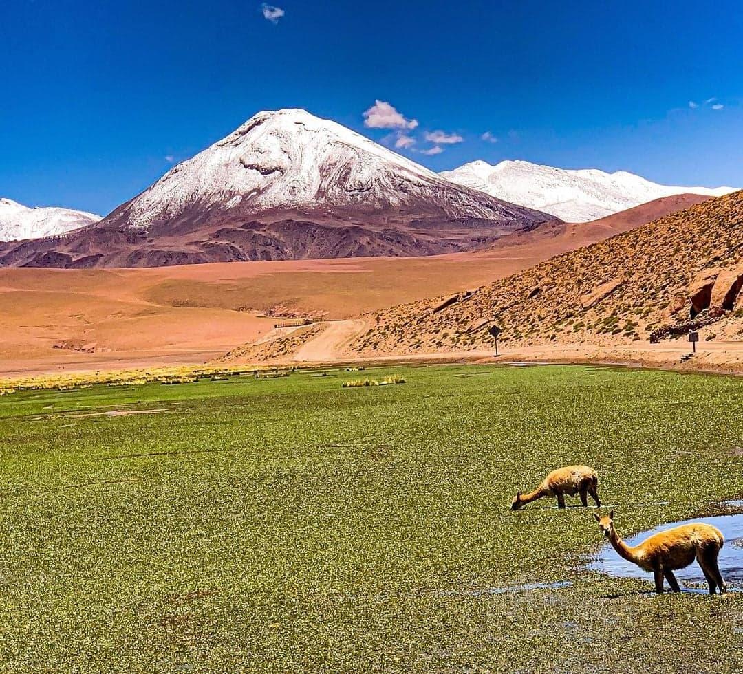 vida salvaje en el altiplano