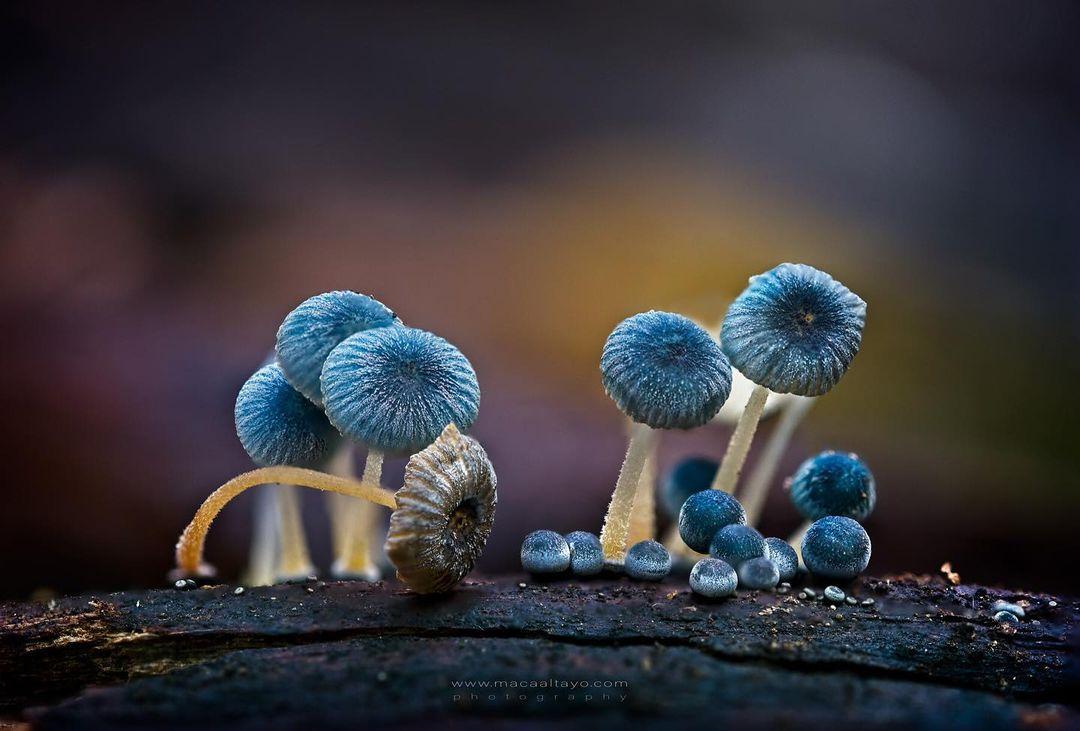 reino-fungi