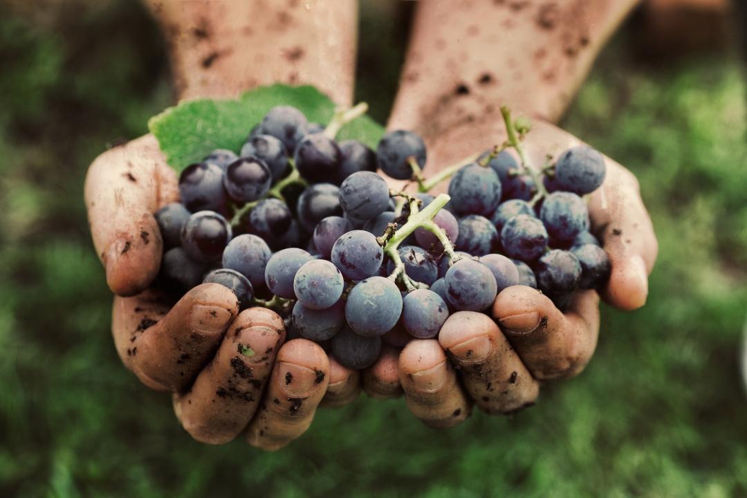 uvas-organicas