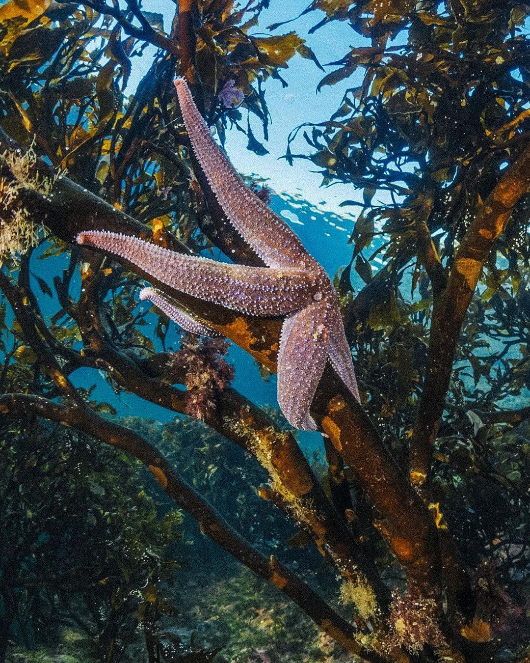 Starfish, another marine species in danger of extinction