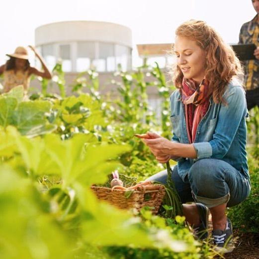 Mujer cosechando zanahorias de la huerta
