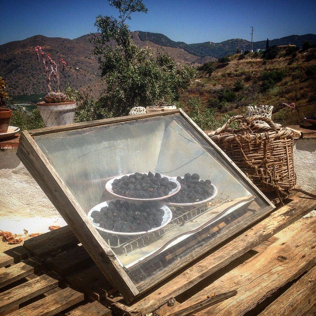 Secando higos en un deshidratador solar rústico