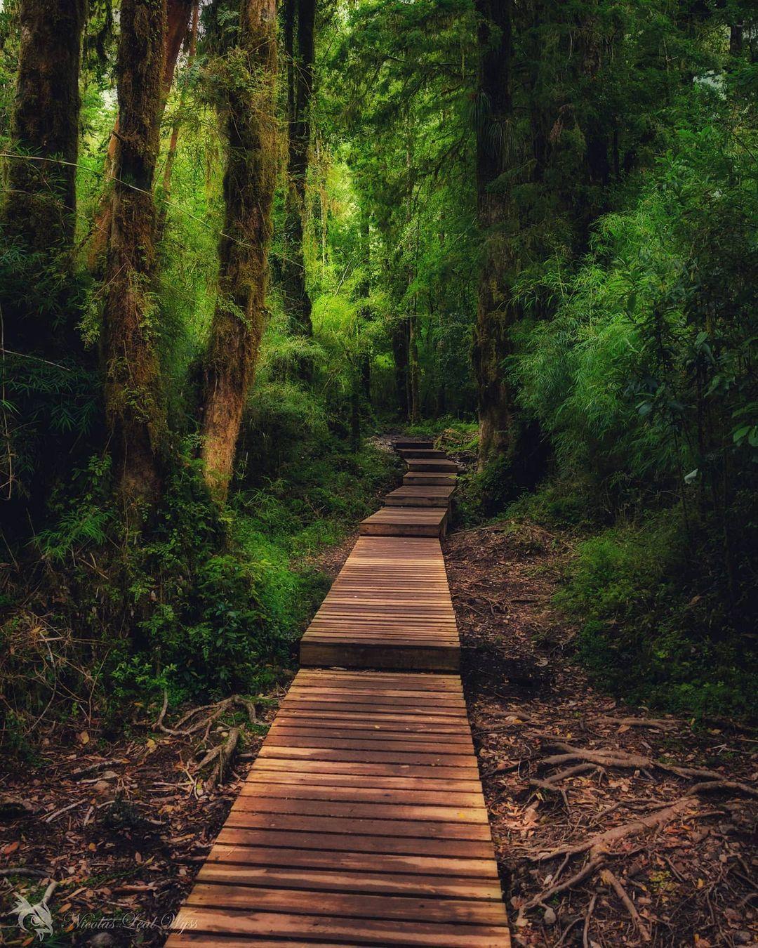 Sentiero del Parco Nazionale Alerce Andino, sud del Cile
