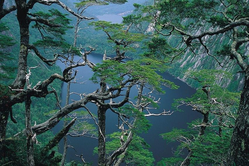 Parco Nazionale Alerce Andino, Cile