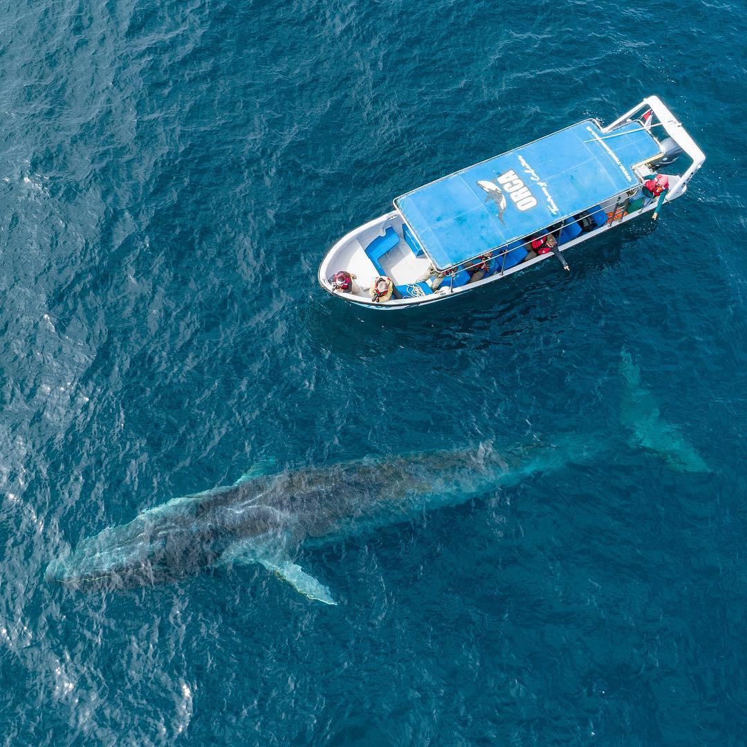 Embarcación junto a una ballena de gran magnitud