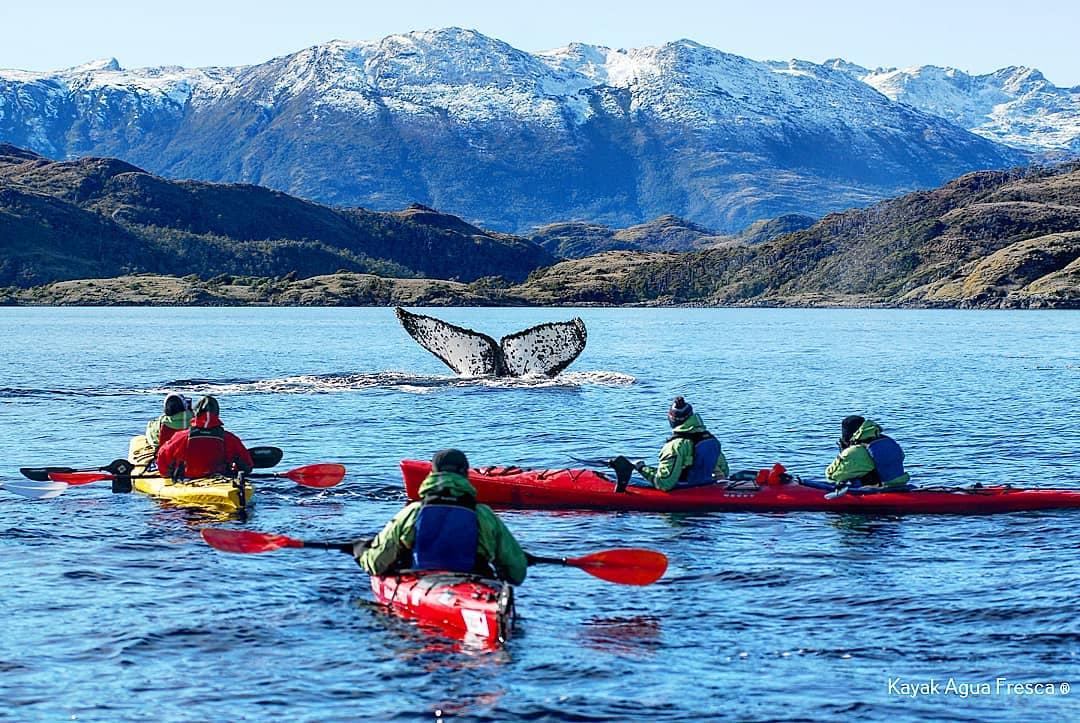 Personas en kayak junto a una ballena