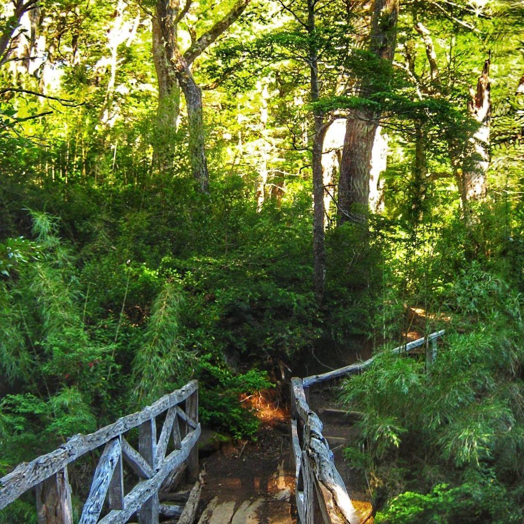 Petit sentier entre les arbres du Parc National Huerquehue
