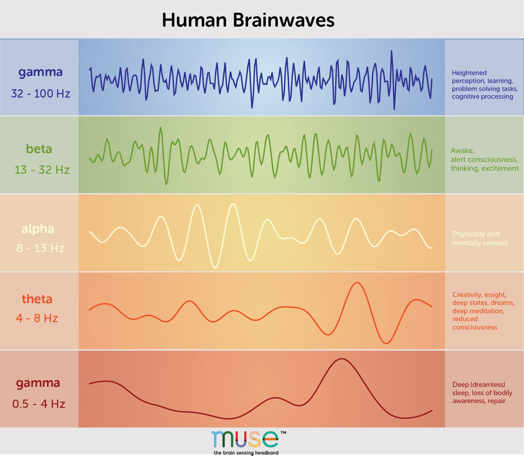 brainwaves, brain waves, brainwave frequencies, alpha brain waves