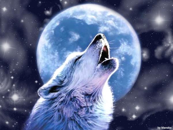ravensilverwolf