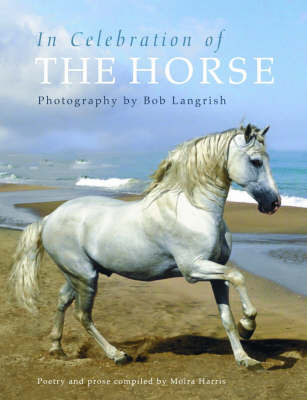In Celebration of the Horse