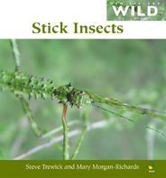 Stick Insects (NZ Wild)