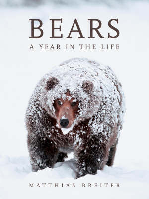 Bears : A year in the life