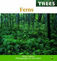 Ferns (NZ Trees)