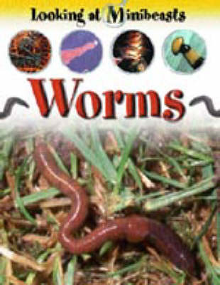 Worms (Looking at Minibeasts)