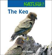 Kea - Nature Kids - OUT OF PRINT