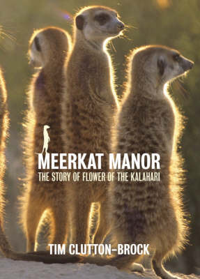 Meerkat Manor: Flower of the Kalahari