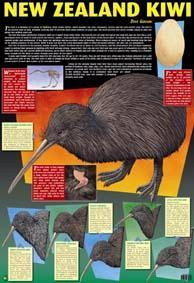 New Zealand Kiwi Wallchart
