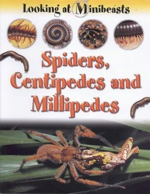 Spiders, Centipedes and Millepedes (Looking at Minibeasts)