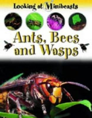Ants, Bees and Wasps (Looking at Minibeasts)