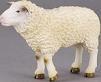 MED Sheep