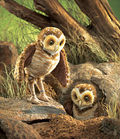 Burrowing Owl Handpuppet