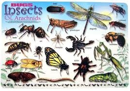 Bugs, Insects & Arachnids Learning Placemat
