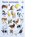 Farm Animals Wallchart