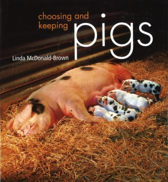 Large choosing keeping pigs