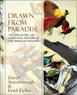 Drawn from Paradise The Discovery, Art and Natural History of the Birds of Paradise