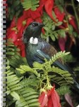 NZ Wildlife Illustrated Journal